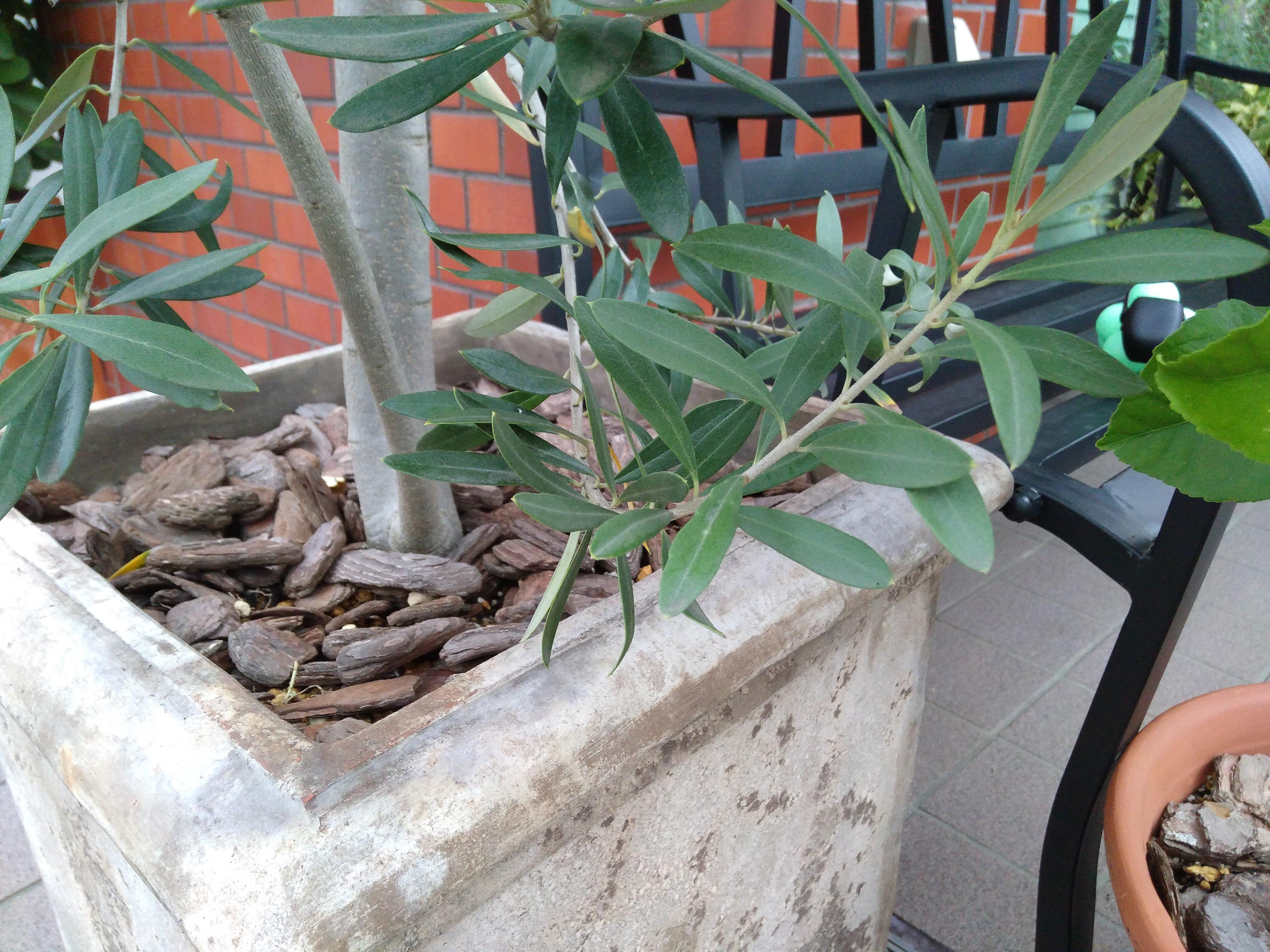 観葉植物と長椅子とレンガの壁